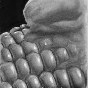 Corn - Illustrations by Umit Demir