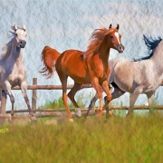 Horses 1 - Illustrations by Umit Demir - Watercolor